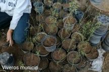 Prepa Sanmiguelense Servicio Social Reforestación 2